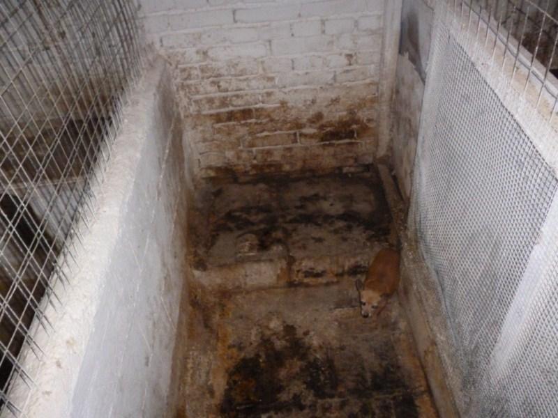 Sala Parto Per Cani : Le guardie zoofile oipa brescia sequestrano un allevamento con 41