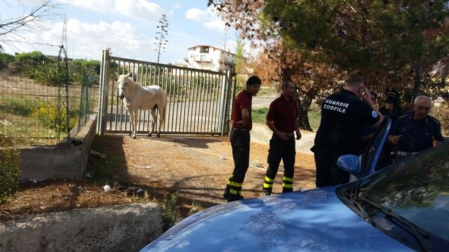 Caltanissetta un cavallo aveva smarrito la strada di casa - Avere un cavallo ...