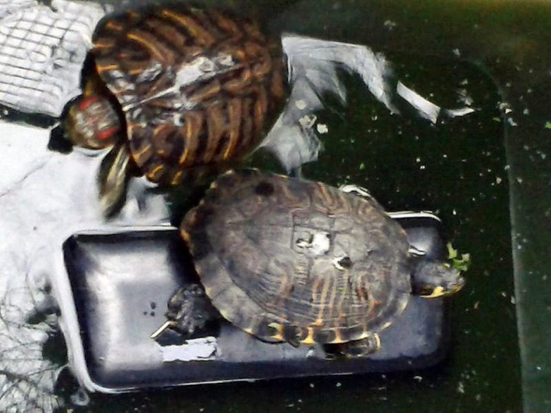 Non solo cani e gatti il drammatico fenomeno delle for I gatti mangiano le tartarughe