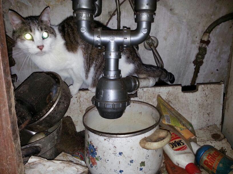 Milano abbandonati in un appartamento serrato e colmo di for I gatti mangiano le tartarughe