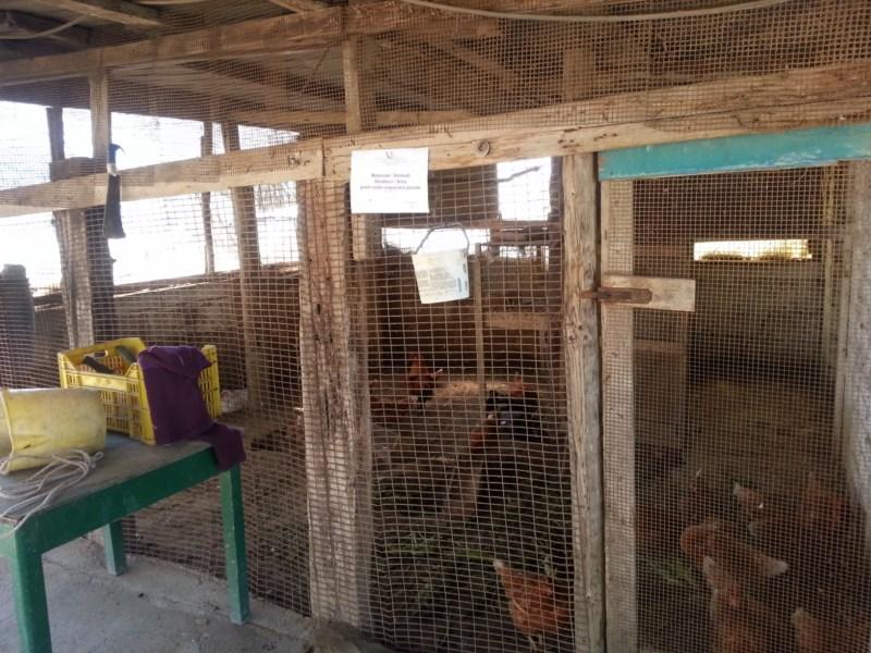 Sulla carta agriturismo di fatto campo di prigionia per for Box per cani in muratura