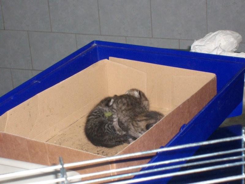 """Gi"""" """"di"""" ed """"effe"""", i tre gattini nati in caserma e salvi grazie ..."""