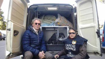 consegna-cibo-e-visita-di-un-cane