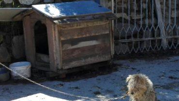 fox-terrier-1600x1200