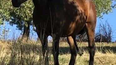 sequestro-2-cavalli-gez-palermo-1-1600x1200