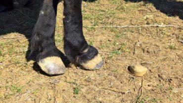 sequestro-2-cavalli-gez-palermo-13-1600x1200