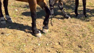 sequestro-2-cavalli-gez-palermo-14-1600x1200