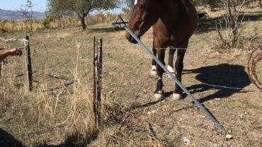 sequestro-2-cavalli-gez-palermo-15-1600x1200