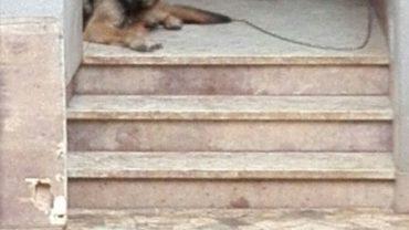 10-cani-palermo-2-1600x1200