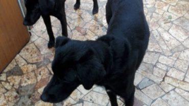 10-cani-palermo-8-1600x1200