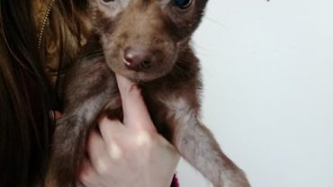 cucciola-con-rogna-in-terapia-1600x1200