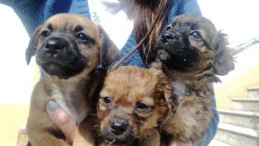 cucciolata-11-cagnolini-2