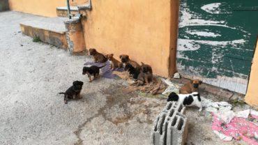 cucciolata-11-cagnolini-6