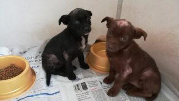 cucciole-con-rogna-appena-recuperate-1600x1200