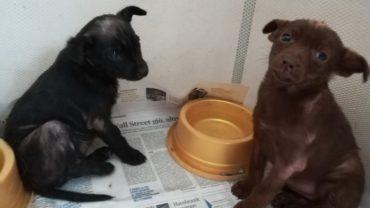 cucciole-con-rogna-in-terapia-1600x1200