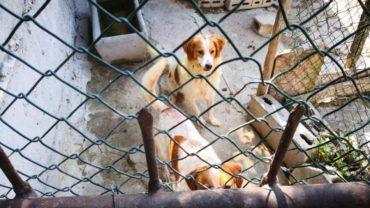 pavia-gez-liberazione-8-cani-11-1600x1200