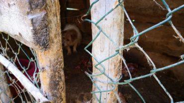 pavia-gez-liberazione-8-cani-14-1600x1200