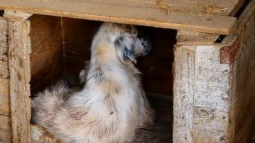 pavia-gez-liberazione-8-cani-17-1600x1200