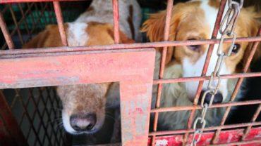 pavia-gez-liberazione-8-cani-19-1600x1200