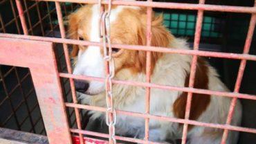 pavia-gez-liberazione-8-cani-2-1600x1200