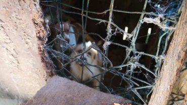 pavia-gez-liberazione-8-cani-5-1600x1200