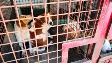 pavia-gez-liberazione-8-cani-8-1600x1200