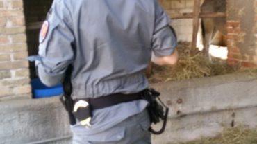 treviso-gez-intervento-cavalli-1-1600x1200