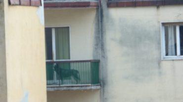 brescia-gez-sequestro-malamute-6-1600x1200