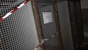 sequestro-napoli-pitbull-allevamento-4