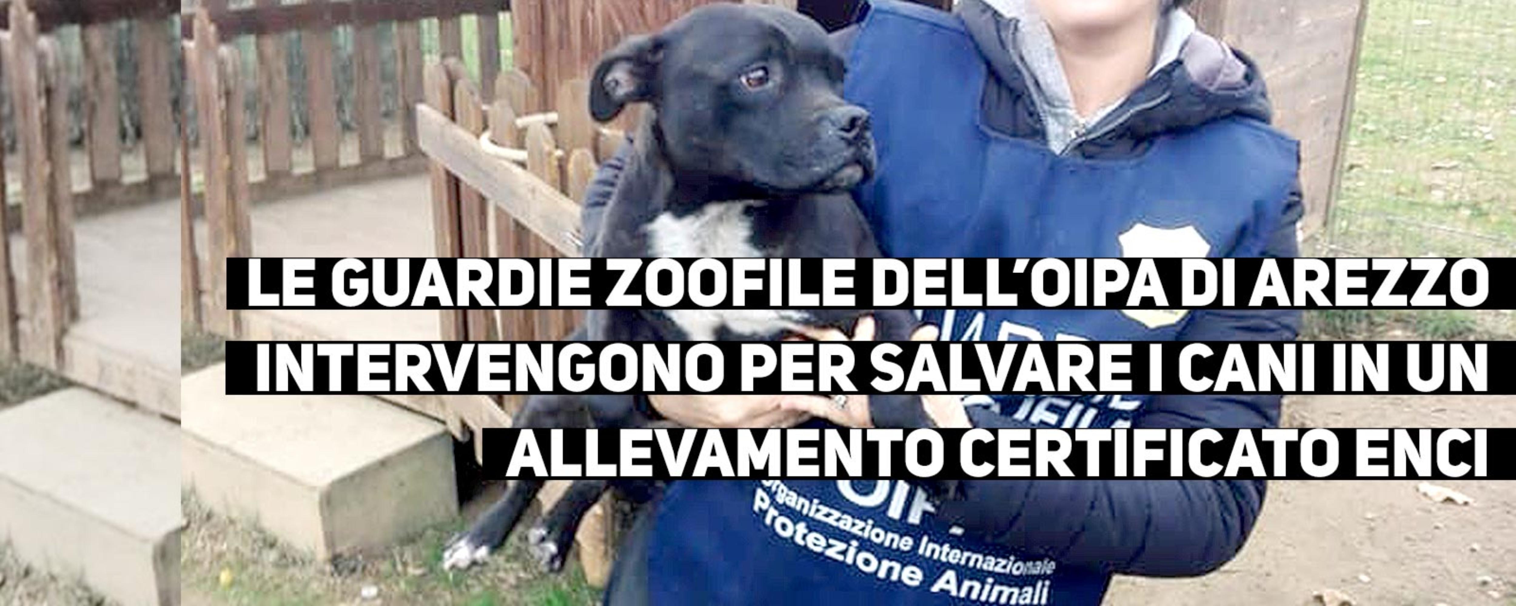 slider-newsarezzo