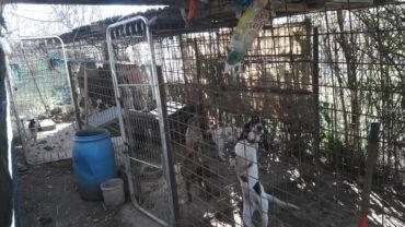 roma-sequestro-11-cani-12