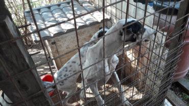 roma-sequestro-11-cani-23