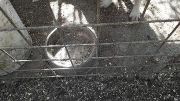 roma-sequestro-11-cani-25