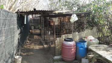 roma-sequestro-11-cani-26