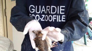 guardie-zoofile-udine-13