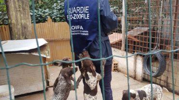guardie-zoofile-udine-3