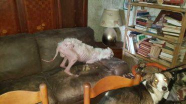 gez-caserta-sequestro-cani-rogna-19