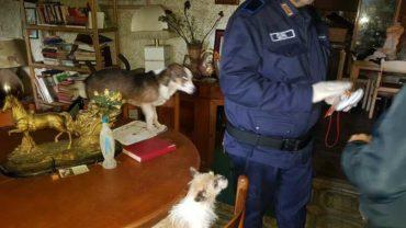 gez-caserta-sequestro-cani-rogna-20