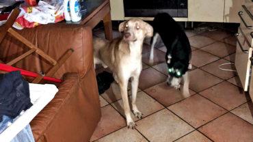 prato-sequestro-10-cani-buio-1