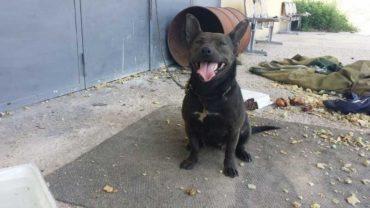 sequestro-cane-roma-1