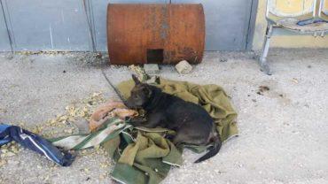 sequestro-cane-roma-17