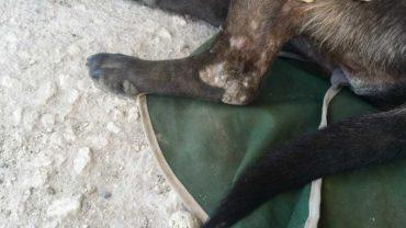 sequestro-cane-roma-23