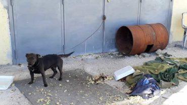 sequestro-cane-roma-30