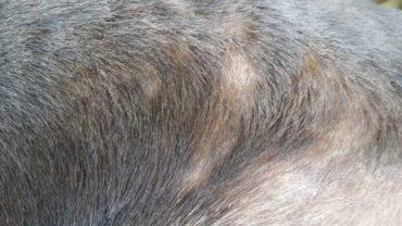 sequestro-cane-roma-9
