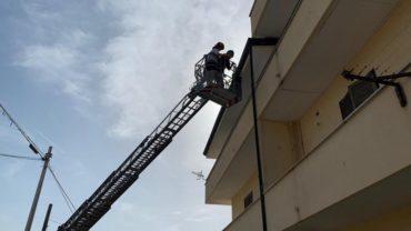 gez-caserta-cane-balcone-6