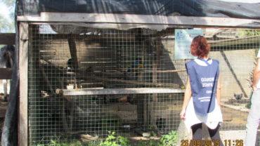 pappagallo-roma-sequestro-condanna-10