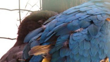 pappagallo-roma-sequestro-condanna-11