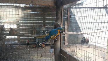 pappagallo-roma-sequestro-condanna-5