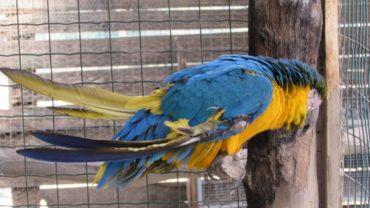 pappagallo-roma-sequestro-condanna-6