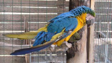 pappagallo-roma-sequestro-condanna-8